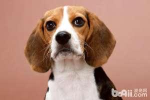 新生幼犬如何科学护理-狗狗品种