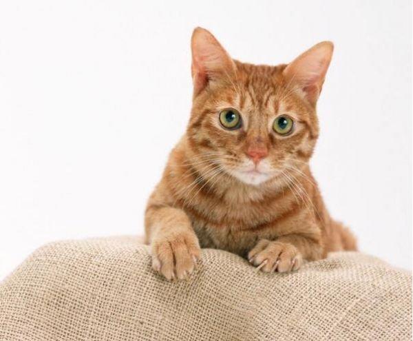 猫胰腺炎症状